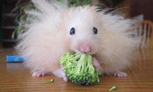 mouse broccoli 480934_445448165496373_1216922340_n