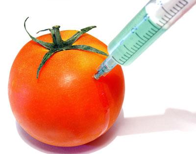 GMO Tomatoe