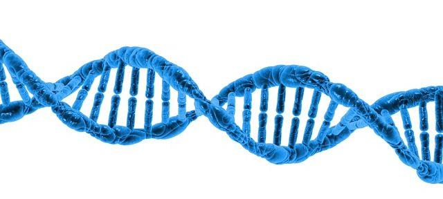 reverse DNA damage