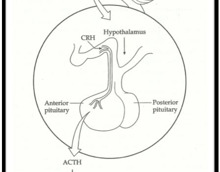 Hormones of the Stress Response