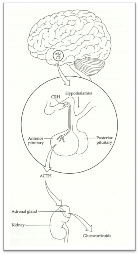 Hormones of the Stress Response