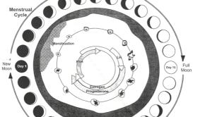 seed cycle