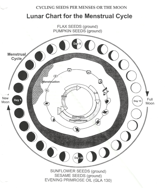 seed cycle for hormones menstrual cycle