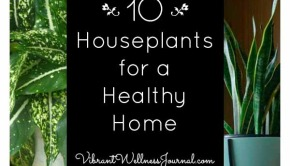 10 Best Indoor Plants for a Healthy Home