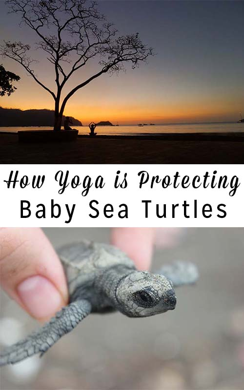 How Yoga is Helping Save Sea Turtles in Costa Rica