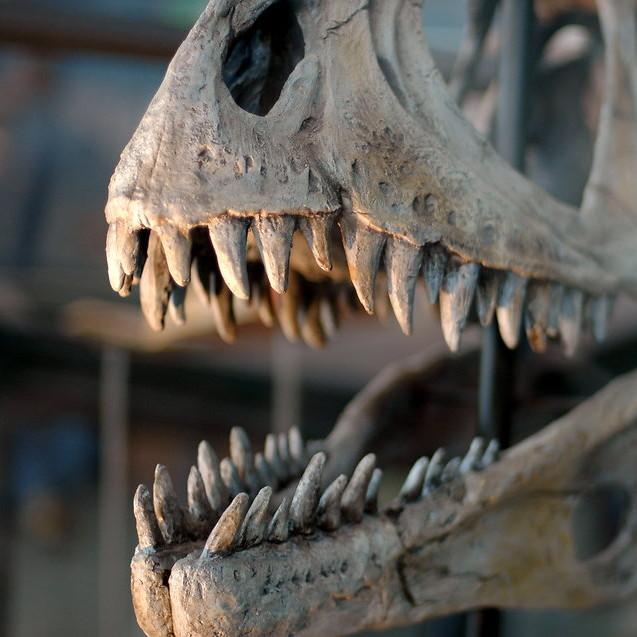 17808-dinosaur-skull-pv
