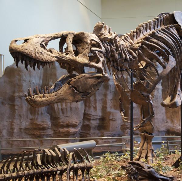 Tyrannosaurus_Rex_Holotype