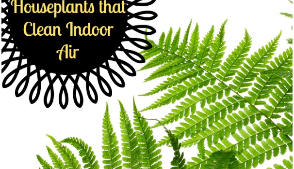 houseplants indoor air quality