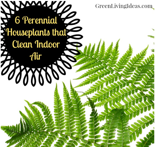 houseplants indoor air quality