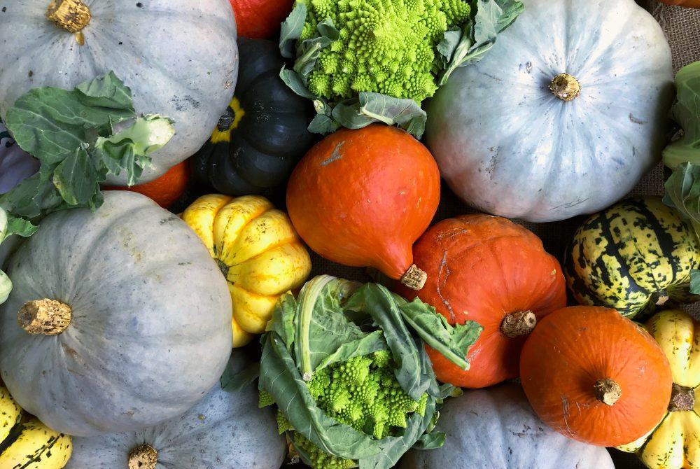 squash and pumpkin recipes